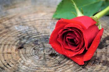 Ceremonia de la rosa: el ritual del que todos hablan