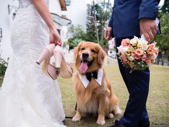 8 tips para incluir a su perro en el matrimonio