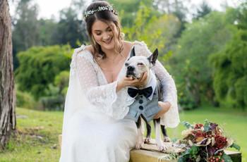 ¿Cómo vestir a nuestro perro el día de la boda?
