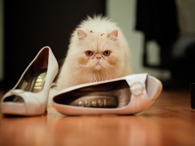 ¿Cómo incluir a nuestro gato en el matrimonio?