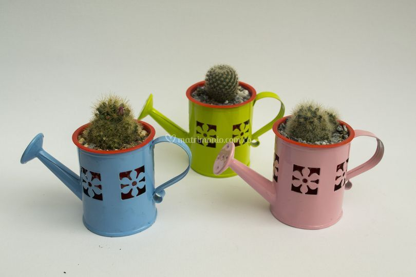 Regadera con mini cactus