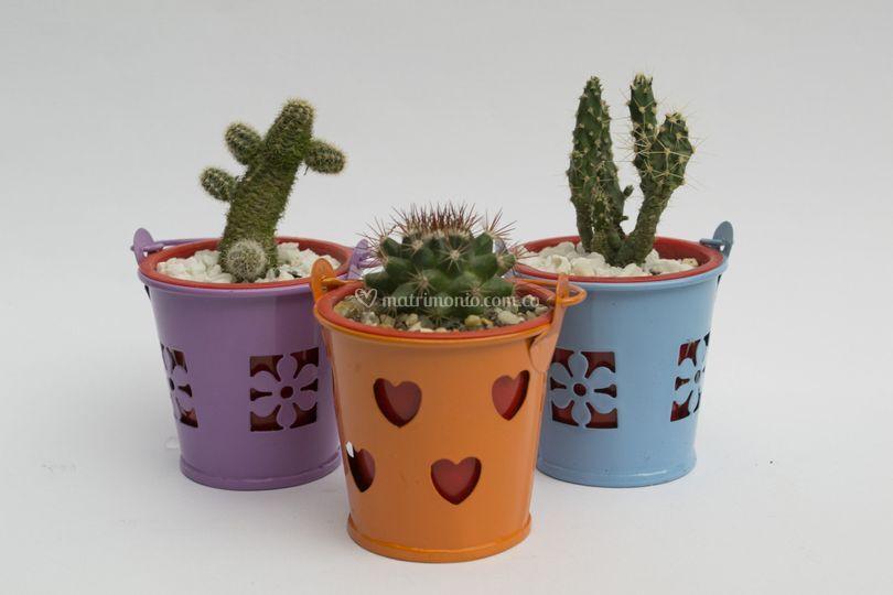 Baldes con cactus
