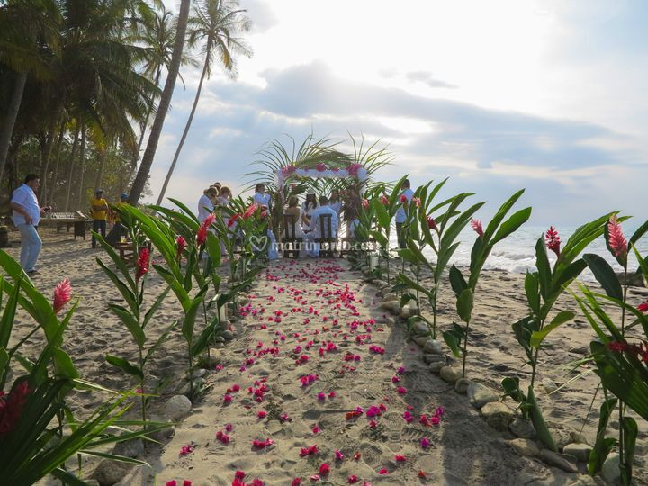 Decoraciones de flores exotica