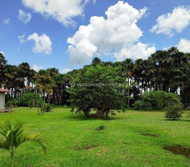 Jardín amplio