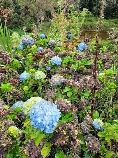Flores entrebosques de arví
