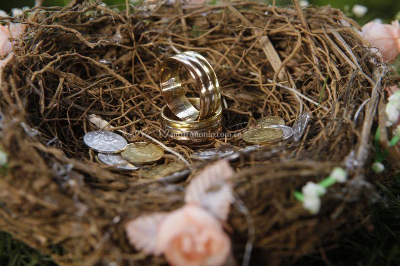 Argollas en nido de ave