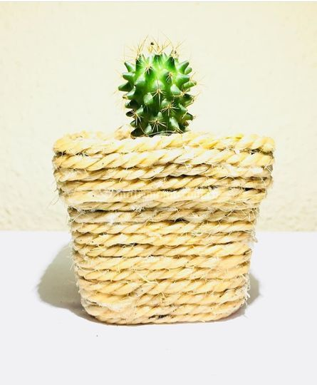 Matera piola cactus