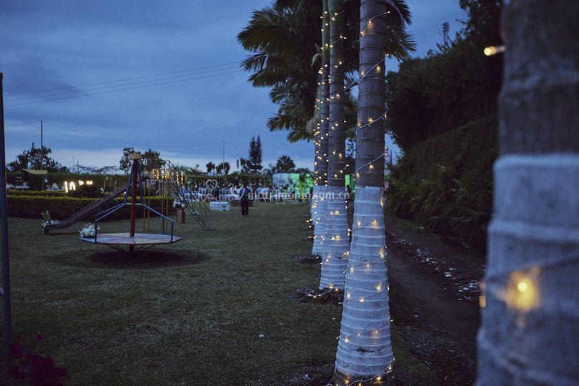 Iluminación palmeras