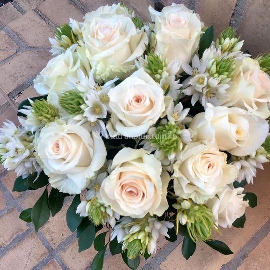 Flores Alheli 7