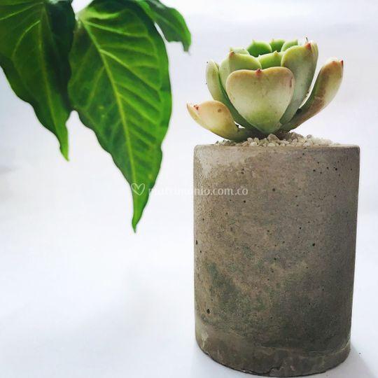 Matera de cemento