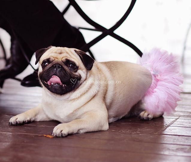 Accesorios para mascotas bodas