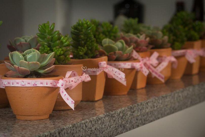 Plantas Terranova