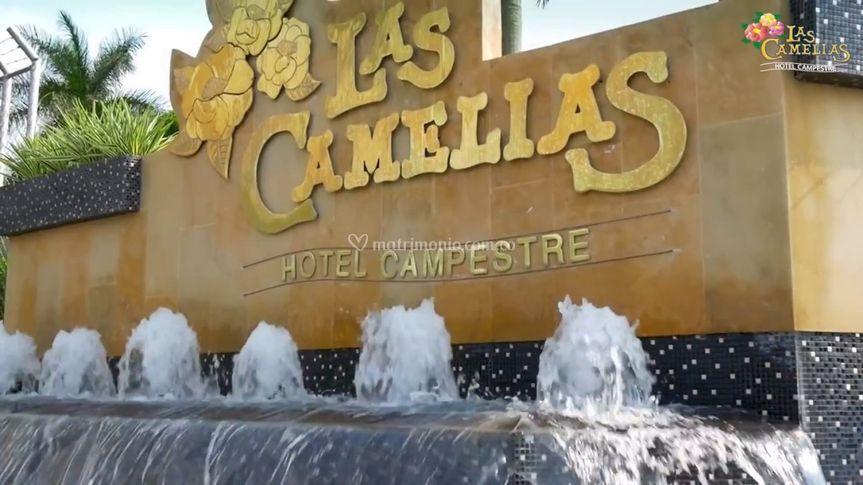 Las Camelias