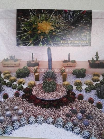 Cactus de fusa