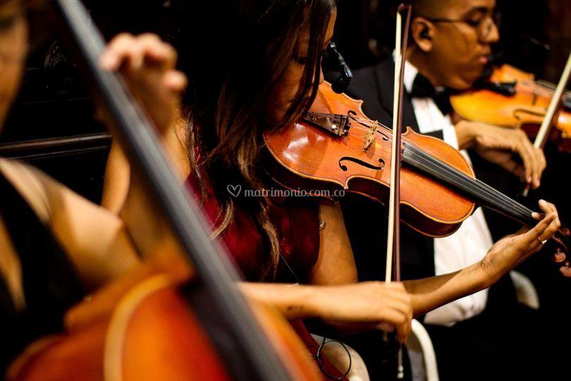 Violines Freddy Roca