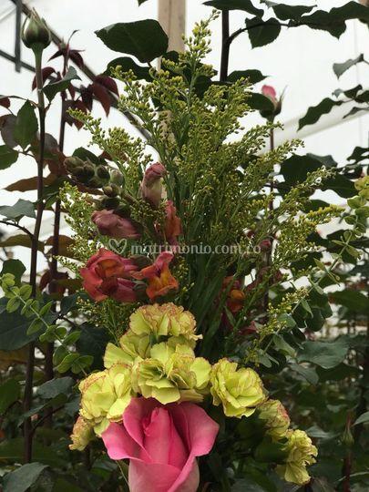 Escoge entre distintas flores