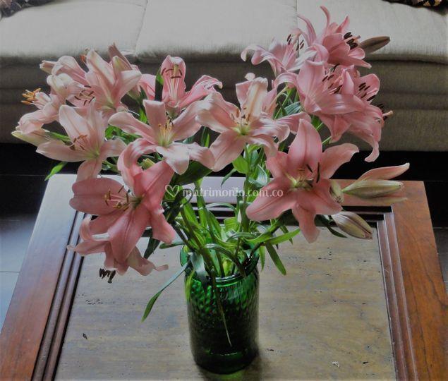 Lirios. Flor tipo exportación