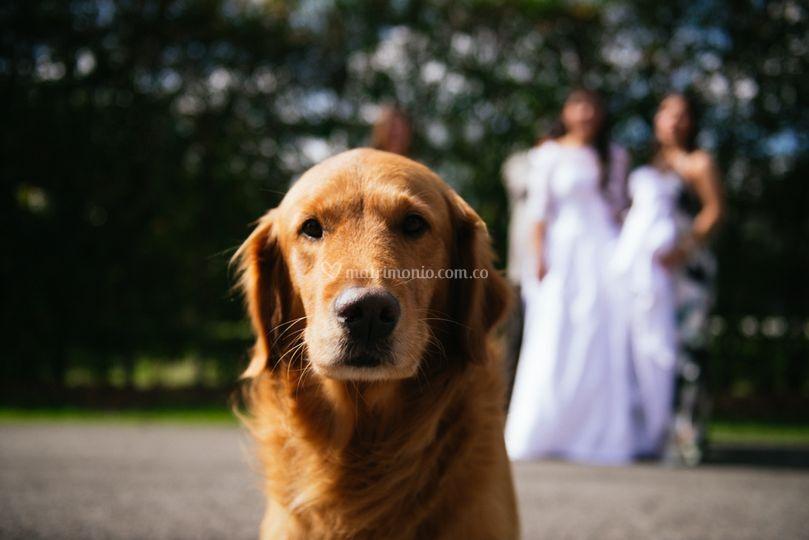 Las mascotas en la boda