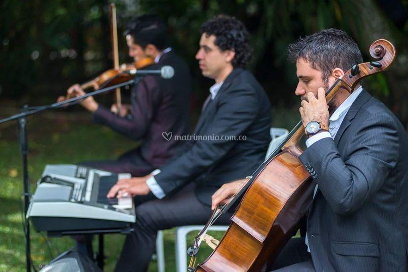 Trio violin cantante chelo