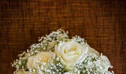 Gerbera Flores 1