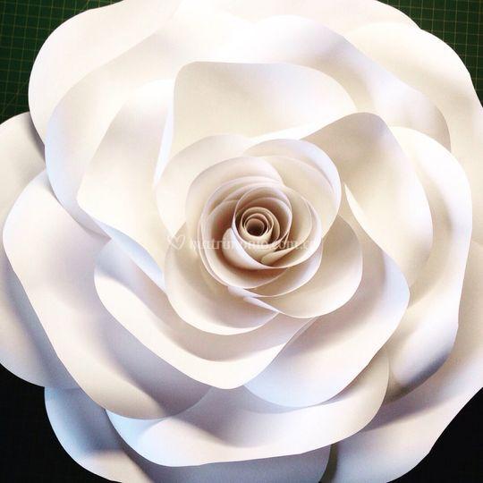 Rosa gigante blanca