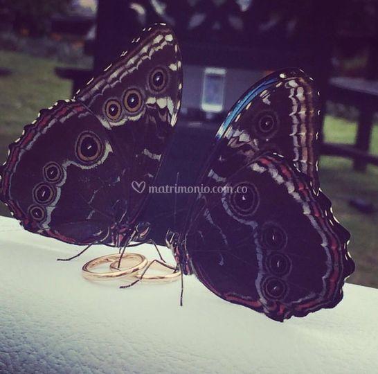 Mariposas y argollas