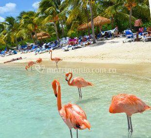 Caribe de ensueño