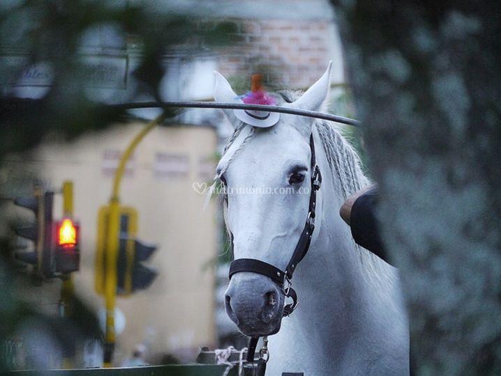 Cherokee, nuestro caballo