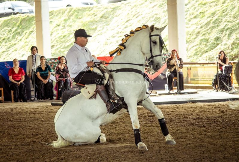 Show caballos
