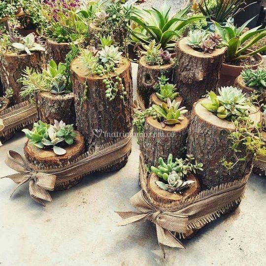 Alai garden