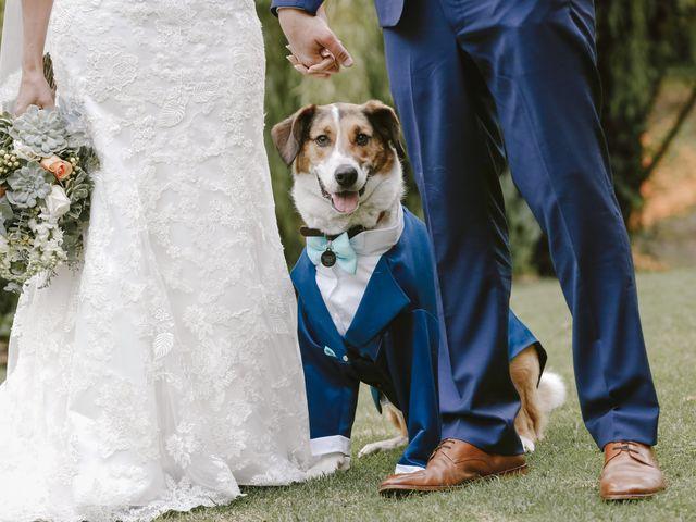 Protocolo para mascotas en el matrimonio