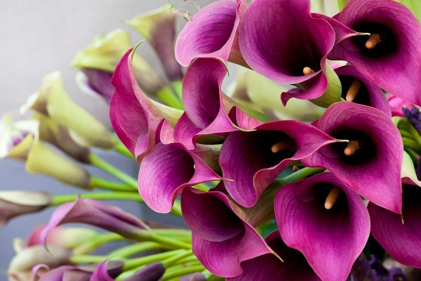Las 11 Flores Mas Usadas Y Conocidas Para Decorar En Los Matrimonios