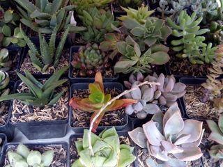 Cactus y Suculentas de Fusa 1