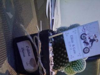 Cactus y Suculentas de Fusa 2