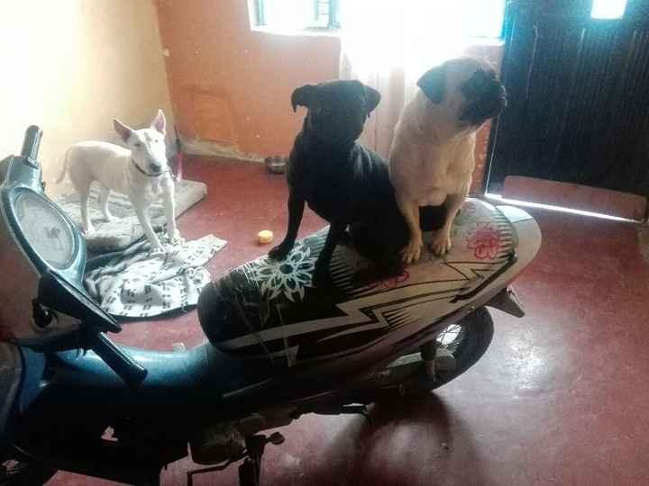 Boda con mascotas - 2