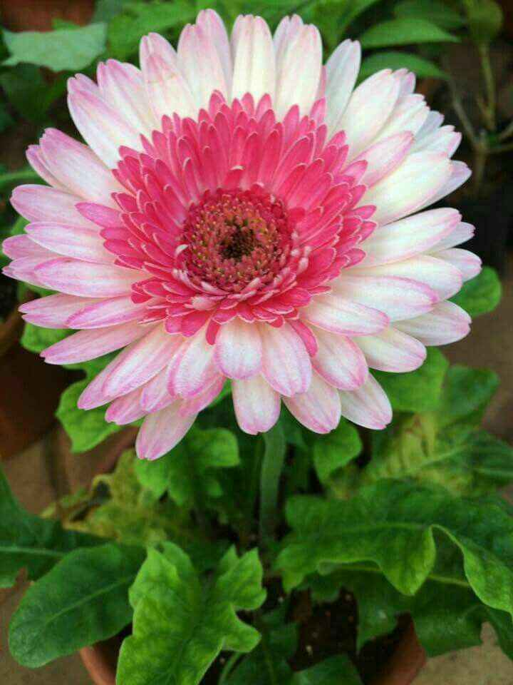Inspiración flores color rosado - 4