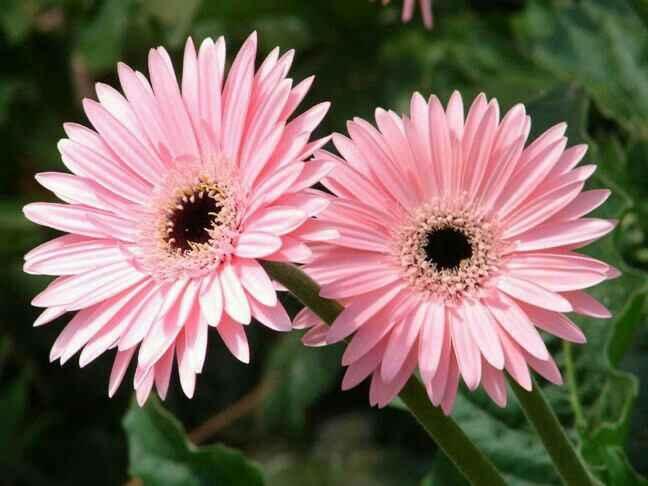 Inspiración flores color rosado - 5