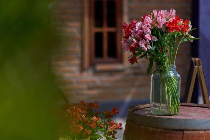 ¿Qué flores te gustan más? 5