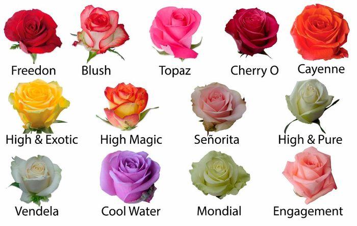 Conozcamos De Flores Rosas