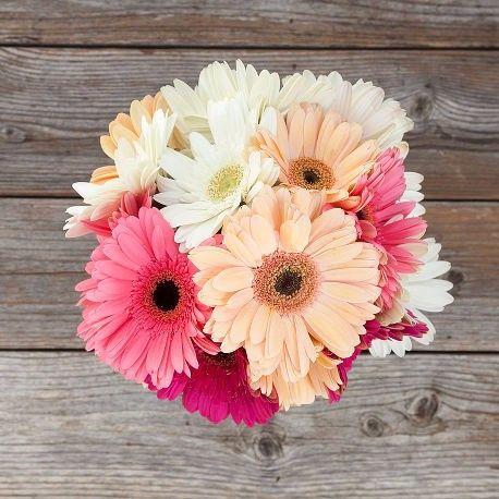 conozcamos de flores gerberas