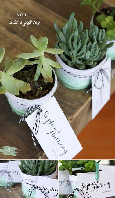 DIY: Cómo personalizar suculentas para tus recordatorios