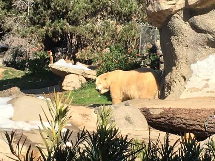 oso polar fitness