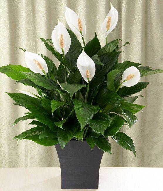 Necesito un ramo de flores blancas!!!! - 3
