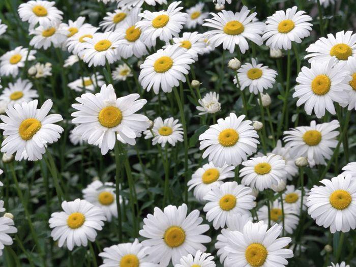 Necesito un ramo de flores blancas!!!! 5