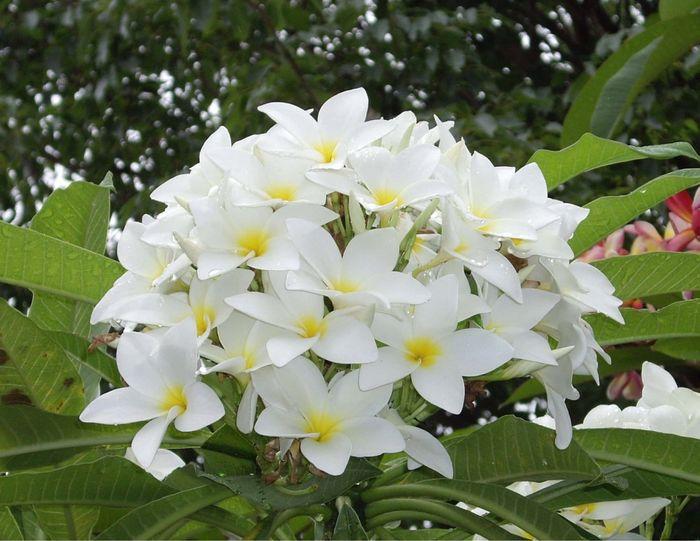 Necesito un ramo de flores blancas!!!! - 6