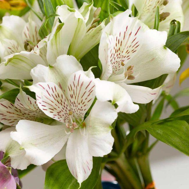 Necesito un ramo de flores blancas!!!! 7