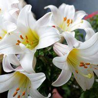 Necesito un ramo de flores blancas!!!! - 2