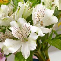 Necesito un ramo de flores blancas!!!! - 7